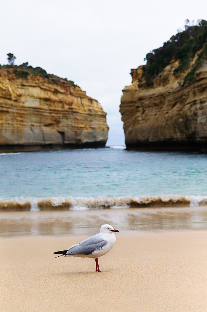 Seagull Loch Ard Gorge Great Ocean Road