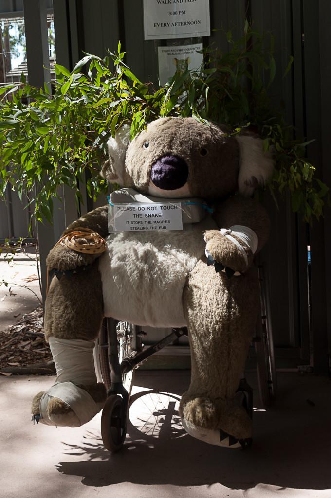 Koala Hospital Port Macquarie 840 (1 von 32)