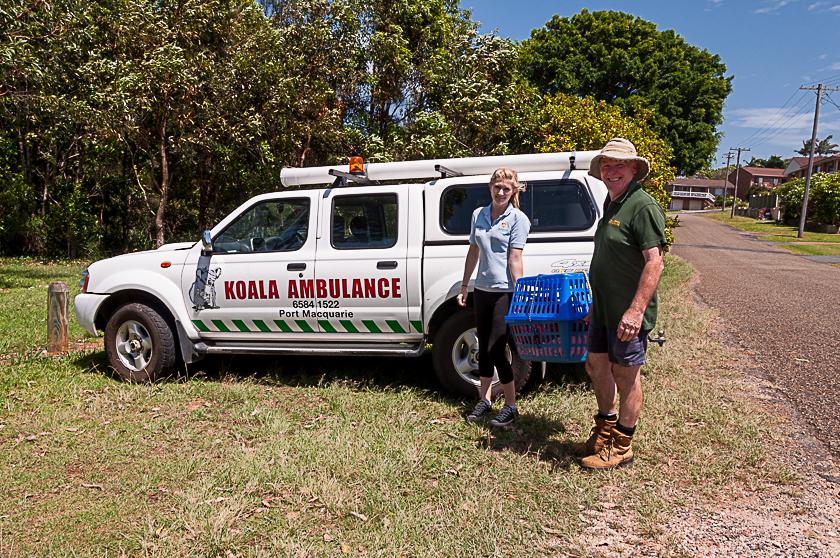 Koala Ambulance
