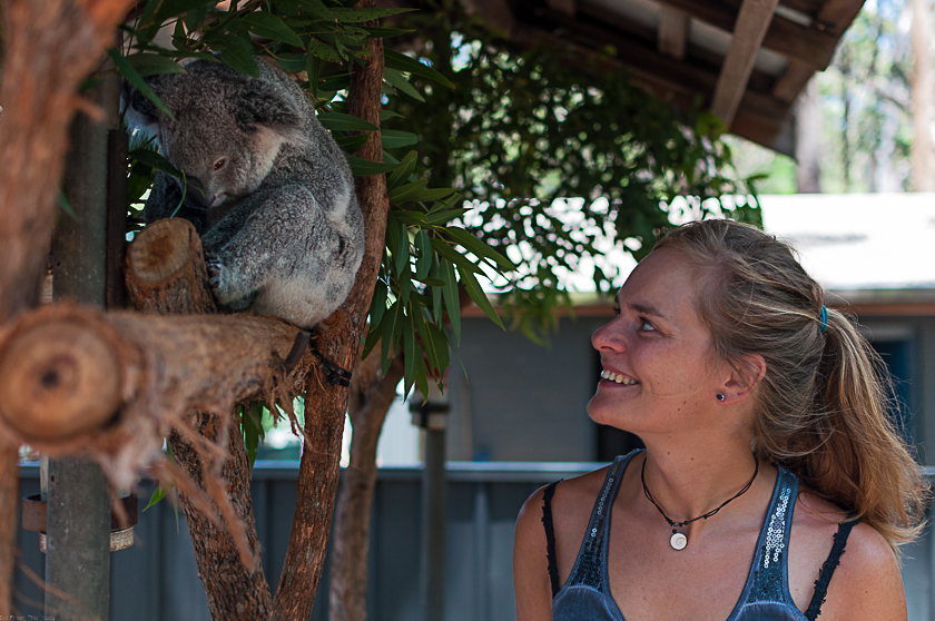 Koala Hospital Port Macquarie 840 (26 von 32)
