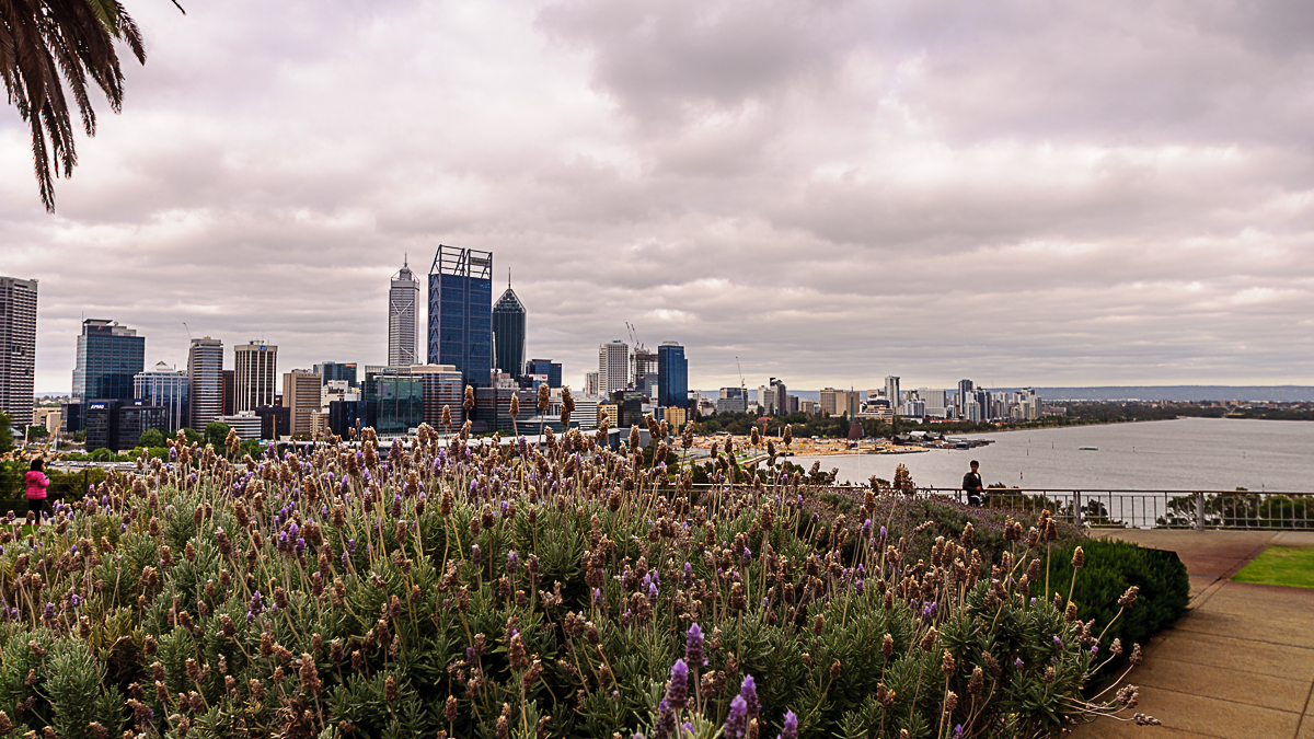 Perth Skyline from Kings Park